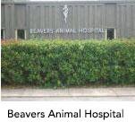 Beavers Animal Hospital