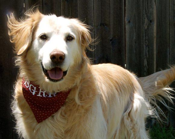 Max *Adopted*