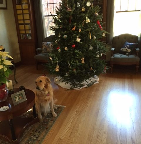 Merry Christmas from Zoey #2459!