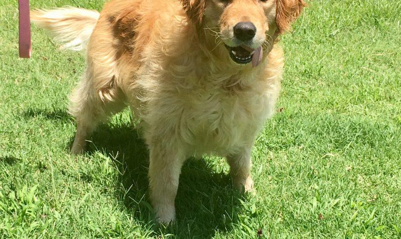 Maisie *Adoption Pending*