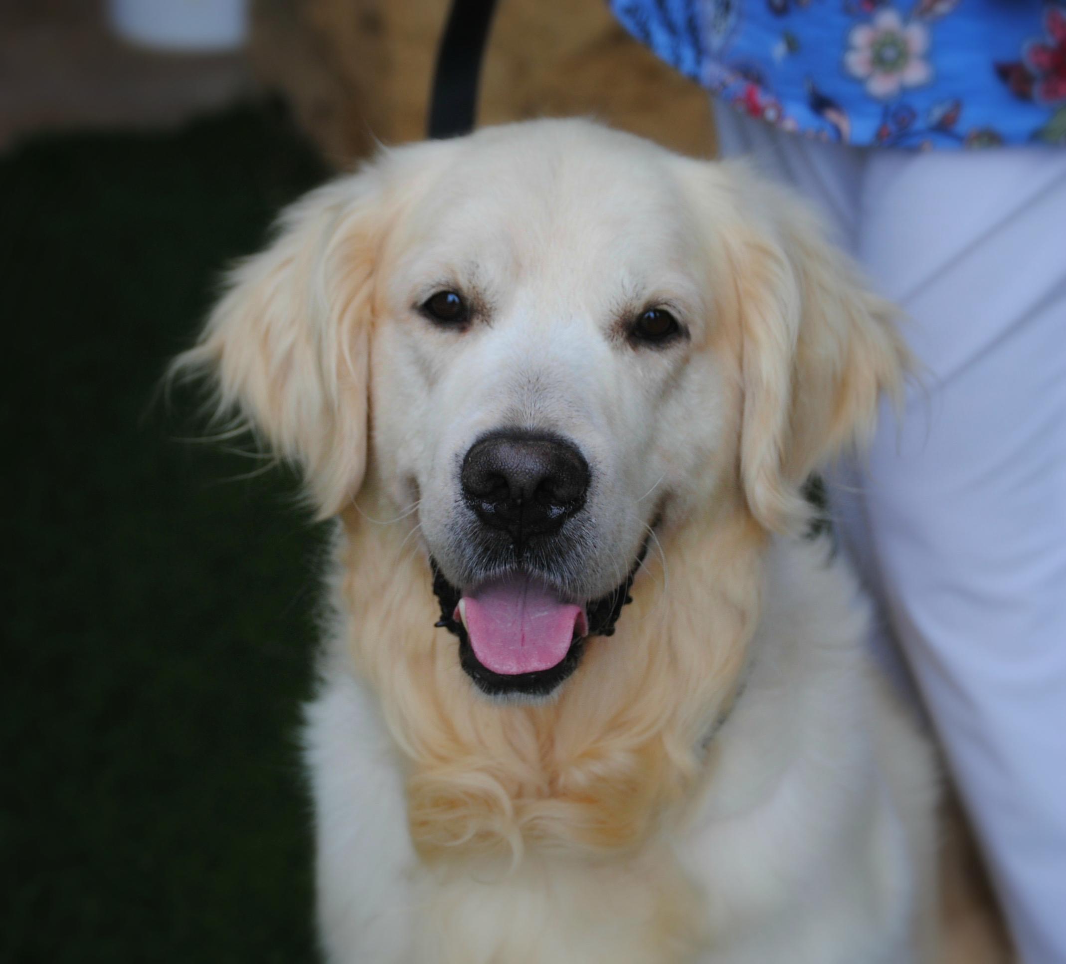 All Dogs - Sooner Golden Retriever Rescue