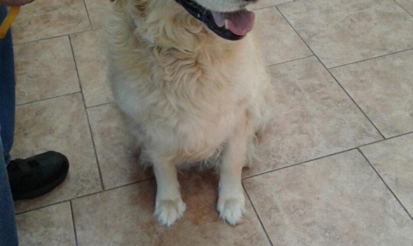 Mabel  * * Adopted **